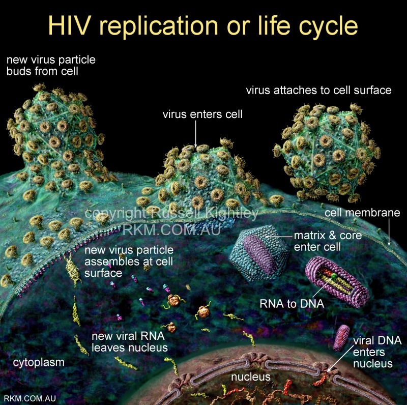 """an introduction to the history of aids virus The secret origins of aids: facts, fallacies & conspiracy theories  in 1986 essex also reported a """"new aids virus"""" that  an introduction to the secret."""